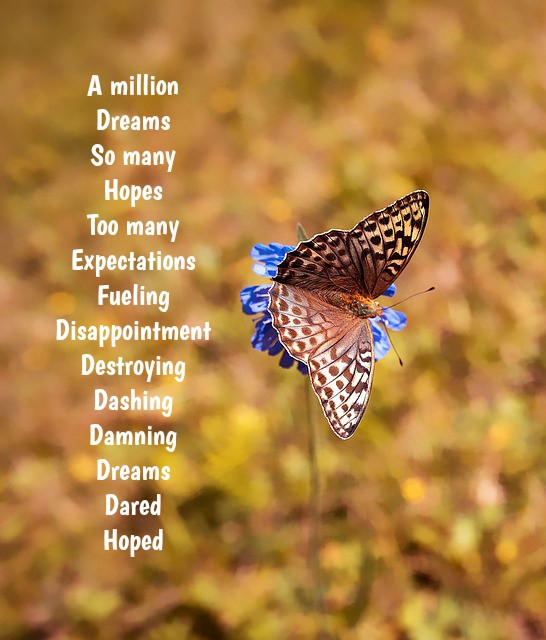butterfly-1698965_960_720