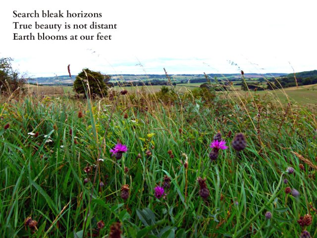 search-bleak-horizons-true-beauty-is-not-distant-earth-blooms-at-our-feet