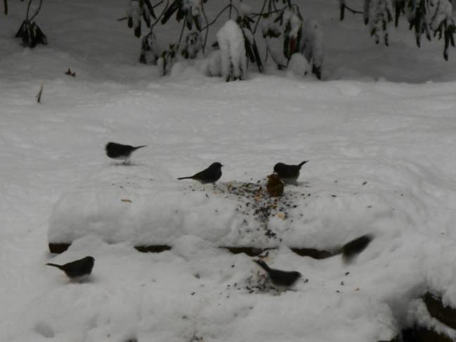 1-7-am-1-birds