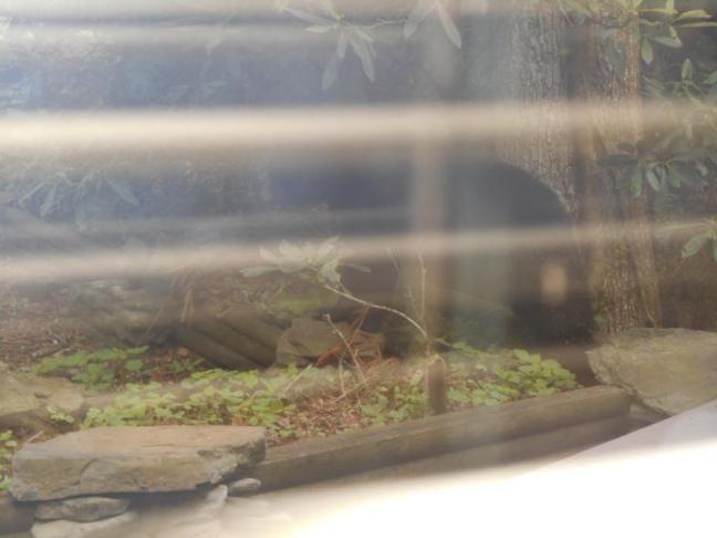 Bear-05-04-17--2