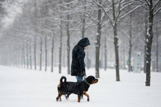 dog-walking-in-snow