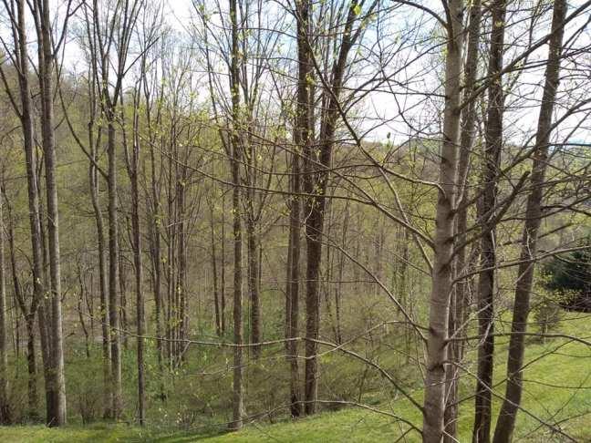 springtrees2