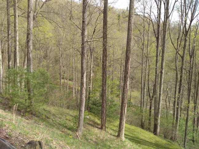 springtrees3