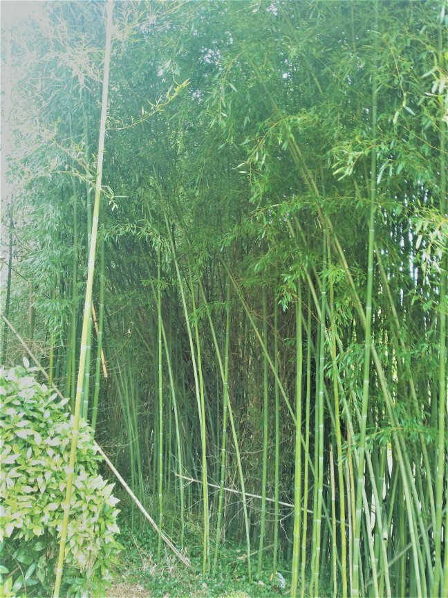 wildbamboo